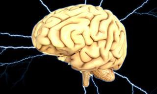 משהו מדהים קורה במוח אחרי שאוכלים את המאכלים האלו...