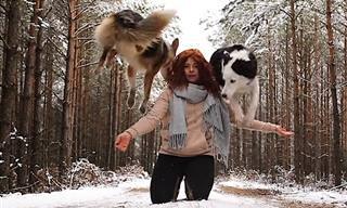 טריקים מיוחדים של כלבי בורדר קולי חמודים וחכמים במיוחד