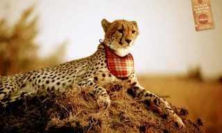 חיות מופיעות בפרסומות - תמונות מגניבות!