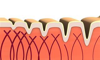 חלבון הקולגן - הכירו את אחד החלבונים החשובים בגוף ואת תפקידיו