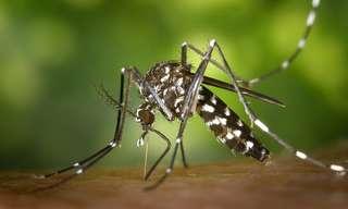 6 סוגי מזון שמושכים יתושים