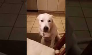 הכלב החמוד הזה לא מפסיק לדבר לרגע!
