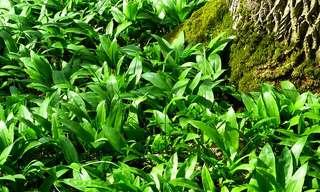 צמחי המרפא שתורמים לבריאות השדיים
