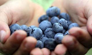 10 מזונות על ואיברי הגוף שעבורם הם חשובים