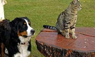 מיומנם של בעלי החיים שלנו - מצחיק!