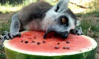 חיות מתוקות שיפתחו לכם את התיאבון...