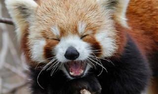 17 חיות מתוקות ומשעשעות שיגרמו לכם לחייך