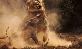 תמונות שהנציחו בעלי חיים ברגעים מדהימים