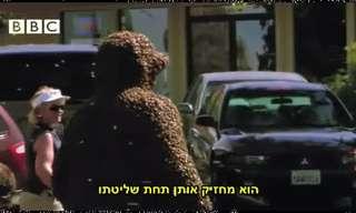 האיש שהפך למלכת הדבורים - לא ייאמן!