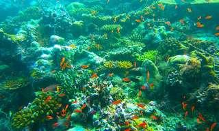 אוסף סרטונים של יצורים מרהיבים מהעולם התת-ימי