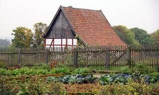 גידולים משולבים - הגנה ועזרה טבעית בגינה הביתית