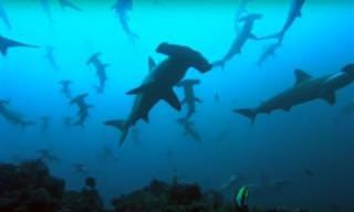 8 סרטוני טבע על החיים שמתחת למים
