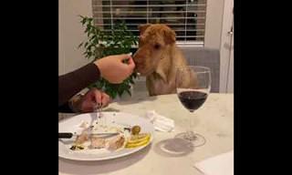 הכלב המנומס הזה מבקש אוכל בדרך מקסימה במיוחד!