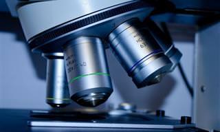 12 פריצות דרך מדעיות גדולות שקרו בשנת 2019
