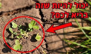איך להיפטר מעשבים שוטים ואילו כדאי לשמור