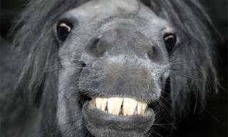 מי אמר שחיות לא יודעות לחייך?