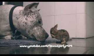 הפיטבול והארנבון - ההוכחה שמי שנולד טוב יהיה טוב גם אם הוא פיטבול