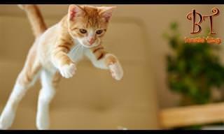 הם לא אקרובטים מנוסים, אבל החתלתולים האלה בהחלט מצחיקים!