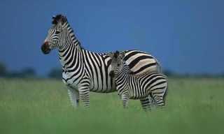20 רקעים של בעלי חיים באיכות HD!