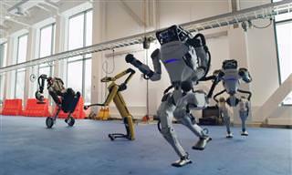הרובוטים של בוסטון דיינמיקס במופע ריקוד סוחף ומשעשע