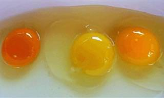 הכירו את המידע החשוב שחבוי בצבעם של חלמוני הביצים שאנו צורכים