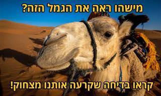 מה קורה כששייח' תובע את רכבת ישראל בגלל היעלמות של גמל?