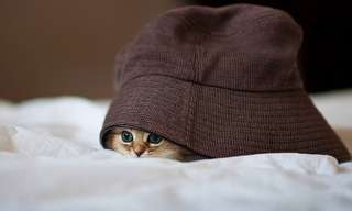 אוסף תמונות של חתולים משחקים מחבואים