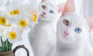 15 החתולים היפים ביותר
