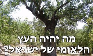 """הכירו את המתמודדים בתחרות """"העץ הלאומי"""" של ישראל"""