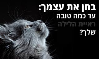 בחן את עצמך: האם יש לך ראיית לילה של חתול?