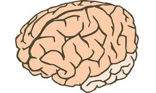 נמצא הגן הייחודי בקליפת המוח