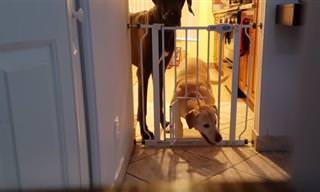 """חיות מחמד בורחות מה""""כלא"""" שלהן"""