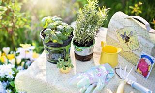 11 הצמחים שמומלץ לשתול ולגדל בעונת האביב