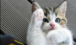 החתלתולים האלו הם הוכחה שדברים חמודים מגיעים באריזה קטנה!