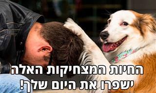 17 תמונות מצחיקות של כלבים, חתולים וחיות מחמד שיגרמו לכם לחייך