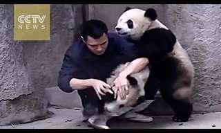 דובי הפנדה החמודים האלה פשוט לא מוכנים לקחת תרופות - קורע!