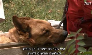 המסע של יוני וקרלו לאורך שביל ישראל - סרטון מרגש!