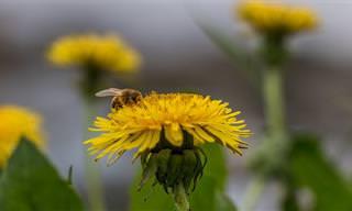 """הכירו את """"מגן דבורים אדום"""" - הארגון שיסייע לכם להרחיק דבורים מאזורכם מבלי לפגוע בהן"""