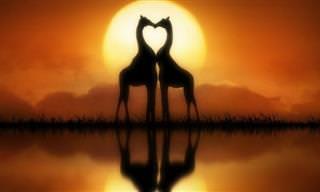 18 חיות שמראות שלאהבה אין גבולות בטבע