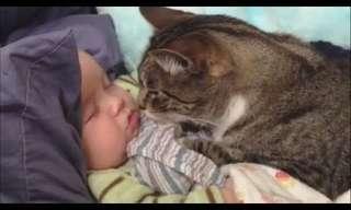 חתולים ותינוקות - סיפור אהבה!