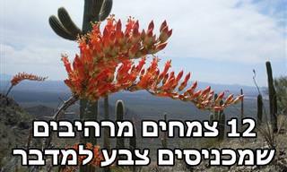 12 פרחים צבעוניים ומרהיבים של צמחי מדבר