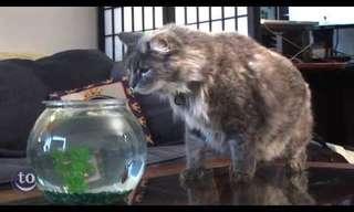 פחדנים כמו חתלתולים - פספוסים מצחיקים!