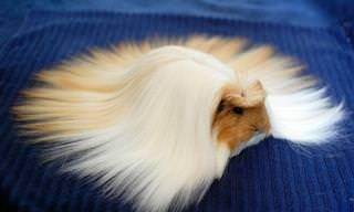 17 חיות שהטבע בירך ברעמת שיער מרשימה במיוחד