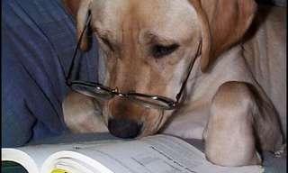 כלבים שעושים דברים לבד כמו בני אדם