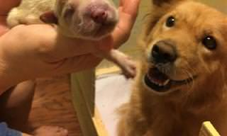 16 תמונות של בעלי חיים שיחממו לכם את הלב ויעלו חיוך על השפתיים