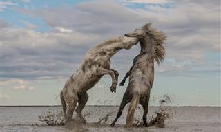 התצלומים הזוכים מתחרות התמונות של החברה לשימור הטבע
