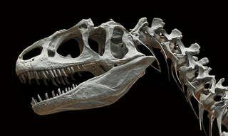 מתי יגיע היום בו נוכל לראות דינוזאורים חיים?