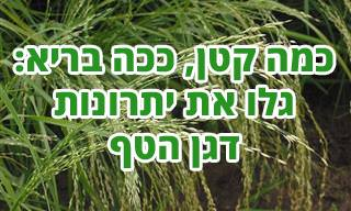 8 יתרונותיו הבריאותיים של קמח הטף