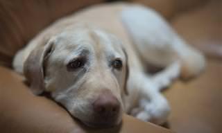 15 תרופות סבתא וטיפים לטיפול ביתי בחיות מחמד