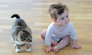 אוסף סרטונים של חתולים חמודים שמגנים על ילדים קטנים